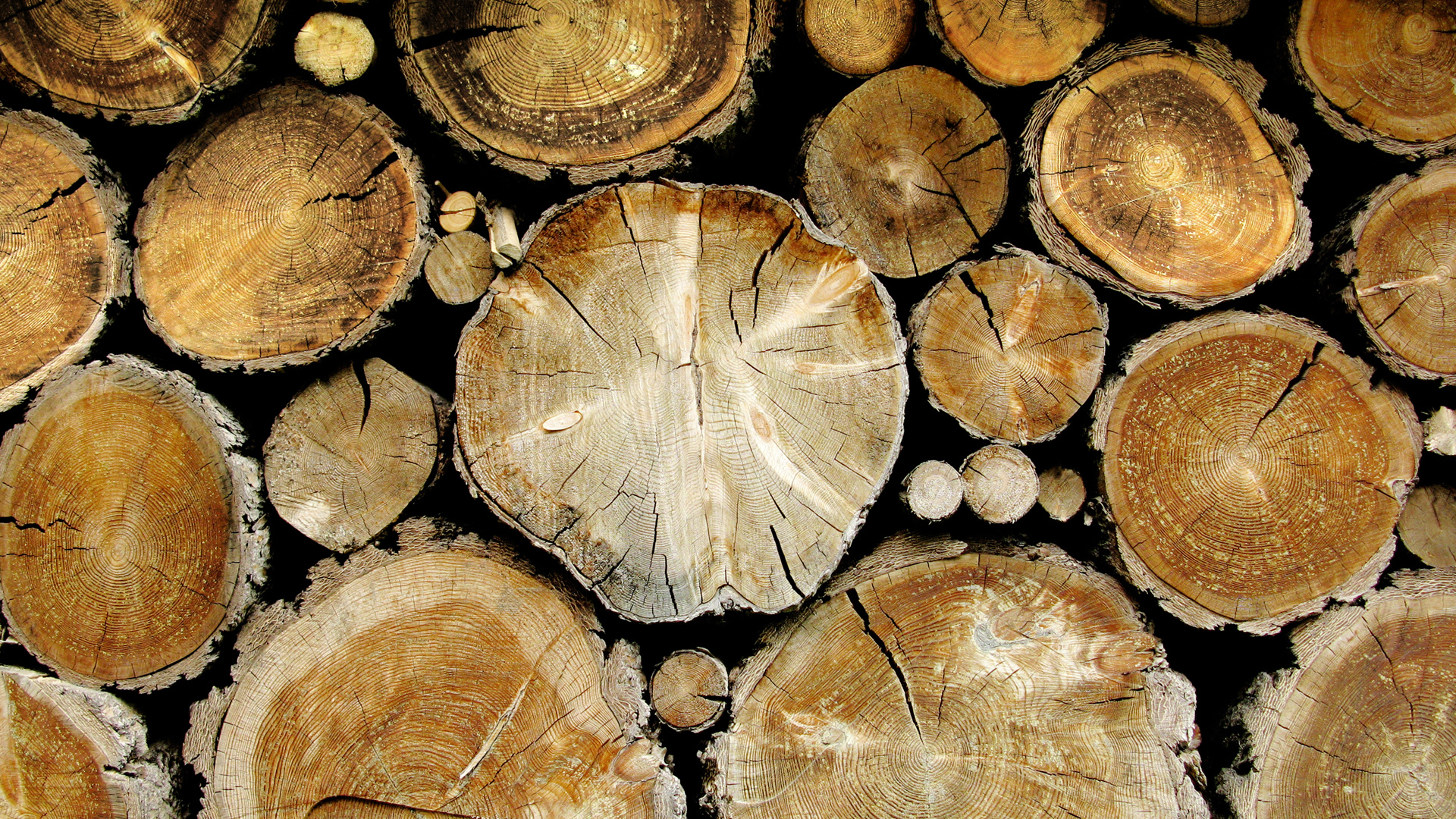 tree_stumps_wood_nature_1920x1080